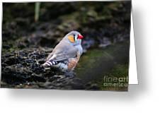Little Red Beak Greeting Card