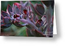 Little Red Blossoms Greeting Card
