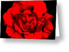 Little Red Flower ... Greeting Card
