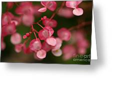 Little Red Hearts Greeting Card