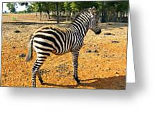 Little Stripes Greeting Card