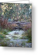 Little Swampy Creek Greeting Card