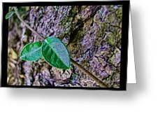Little Vine Greeting Card