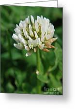 Little White Flower Greeting Card
