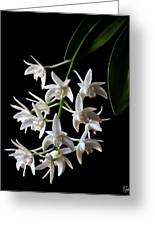 Little White Orchids Greeting Card