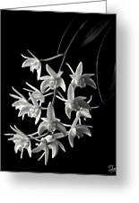 Little White Orchids In Black And White Greeting Card