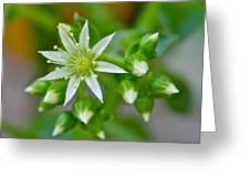 Little White Star Greeting Card