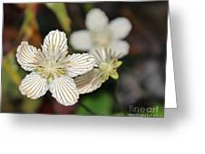 Little Wildflower Greeting Card