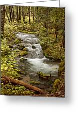 Little Zig Zag Stream Greeting Card