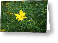 Littlest Daisies Greeting Card