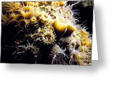 Live Coral Feeding At Night Greeting Card