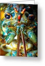 Live New England American Lobsters From Cape Cod Greeting Card