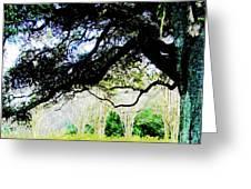 Live Oak At Capitol Lakes Park Greeting Card
