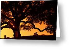 Live Oak- Cemetery- Natchez Mississippi Greeting Card
