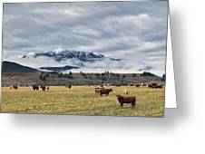 Livingstone Range And Pastureland Greeting Card by Darwin Wiggett