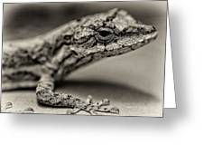 Lizard In Bw Greeting Card