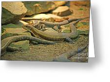 Lizards Greeting Card