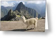 Llama And Machu Picchu Greeting Card