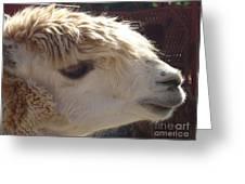 Llama Mmama Greeting Card