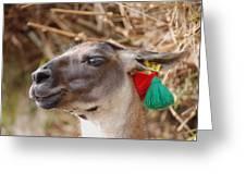 Llama Of Machu Picchu Greeting Card