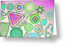 Lm Of Fossilized Diatoms Greeting Card
