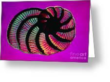 Lm Of Peneroplis Pertusus, A Shelled Greeting Card