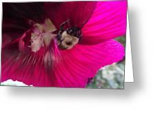 Loaded Bee Greeting Card