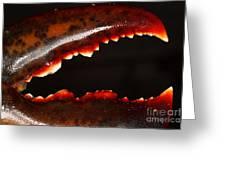 Lobster Claw Greeting Card