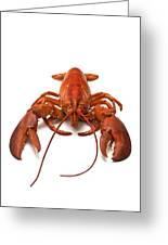 Lobster Greeting Card by David Nunuk