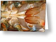 Lobster Male Sex Organs Greeting Card
