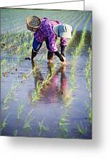 Local Planting Rice By Hand Greeting Card