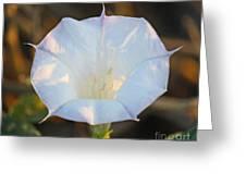 Loco Weed Flower Greeting Card