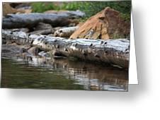 Log On The Lake Greeting Card