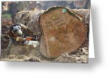 Logger Cutting Trunk Of Rainforest Greeting Card