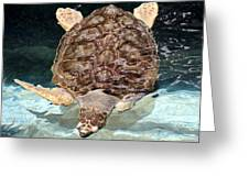 Loggerhead Sea Turtle Greeting Card