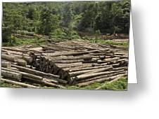 Logs In Logging Area, Danum Valley Greeting Card