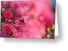 Lollypop Gum Tree Blossoms Greeting Card