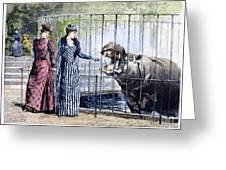 London Zoo, 1891 Greeting Card