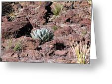 Lone Agave Greeting Card