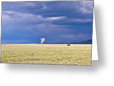 Lone Buffalo 2 Greeting Card