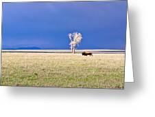 Lone Buffalo 3 Greeting Card