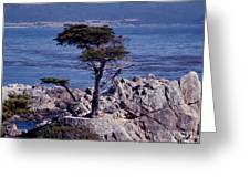 Lone Cypress By The Sea Greeting Card