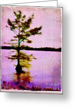 Lone Cypress Greeting Card by Judi Bagwell