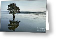 Lone Cypress Tree In Water.  Greeting Card