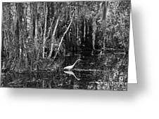 Lone Egret Black And White Greeting Card