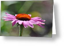 Lone Flower Greeting Card