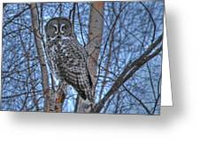 Lone Gray Owl Greeting Card