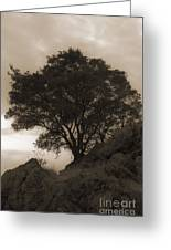 Lone Oak 2 Sepia Greeting Card