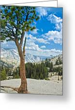 Lone Pine At Half Dome Greeting Card