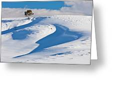 Lone Pine In Winter Greeting Card